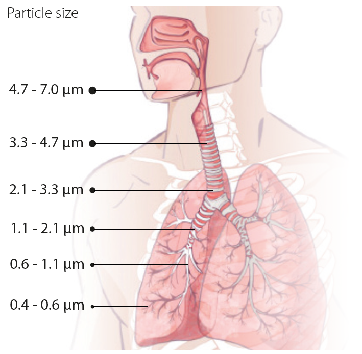 particles in lungs